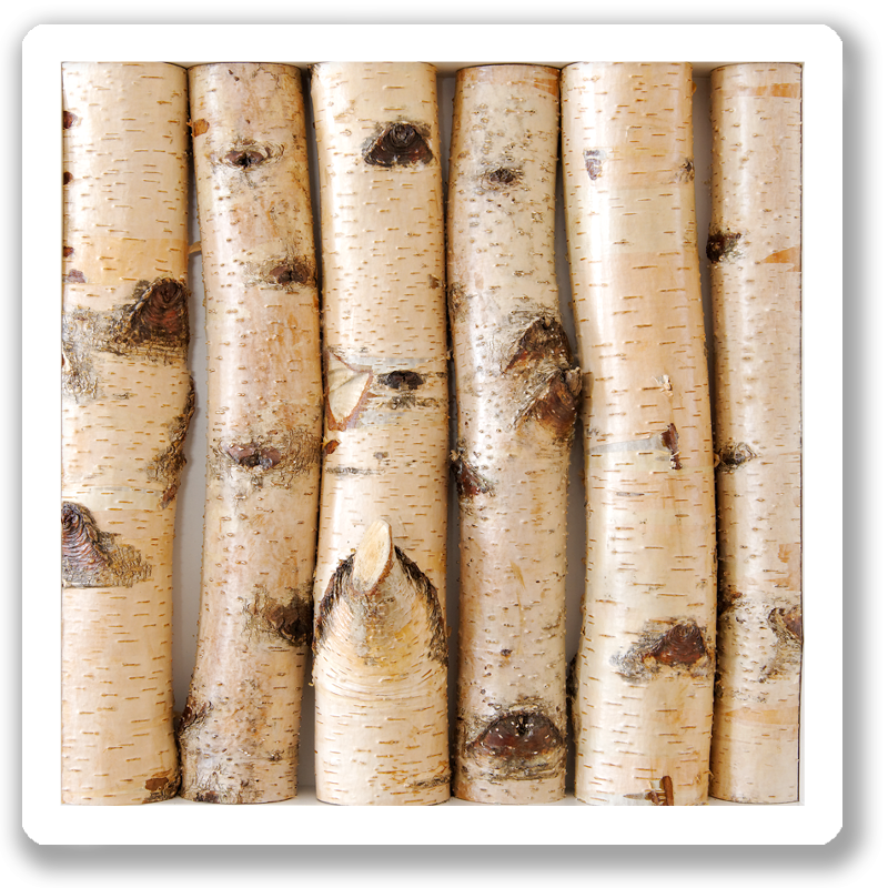 wanddekoration-wallapp-wood-betula-001