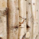 wanddekoration-wallapp-wood-betula-002